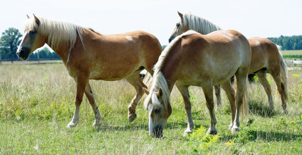 ePoch Effect - Blog - Get Out of Bed: The Journey to Feel Safe - Horses from Courage for Freedom
